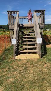 lyman sunflower maze