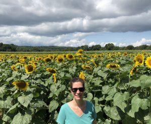 sunflower-fields-ct