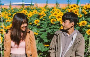 sunflower-farm-for-photos